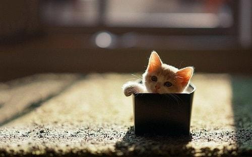 رفتار گربه را رصد کنید