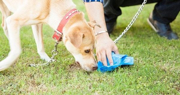 برداشتن مرفوع توسط صاحب سگ