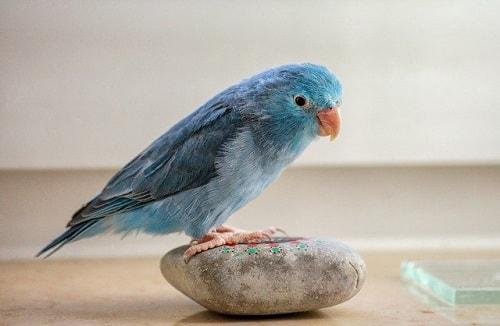 تغییر در ظاهر پرنده هنگام استرس