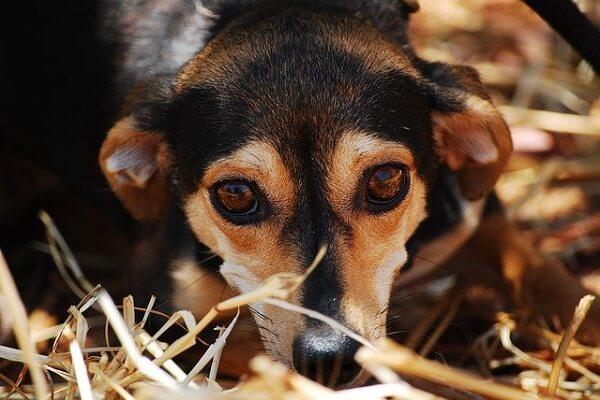 سگ نگران و مضطرب