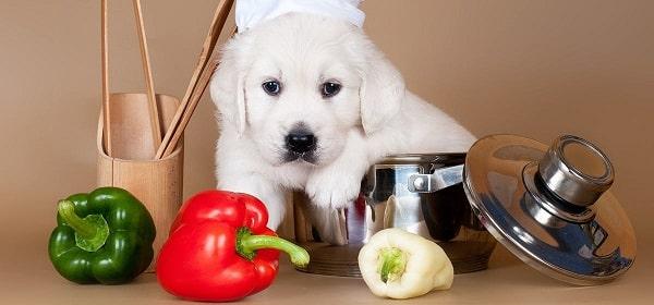 سگ در کنار فلفل دلمه ای قرمز