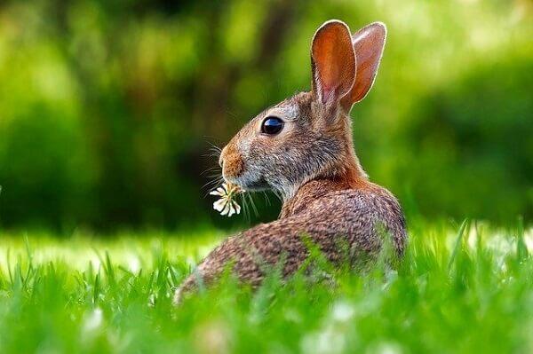 خرگوش در داخل چمن