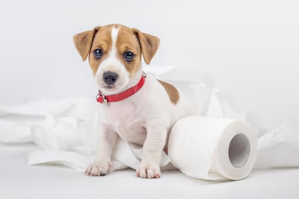 دستشویی سگ و آموزش جای دستشویی به سگ