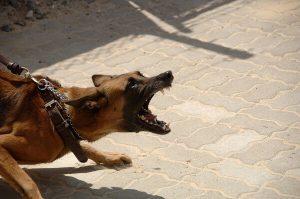 آخرین متدهای اموزشی جهت فرمان حمله به سگ