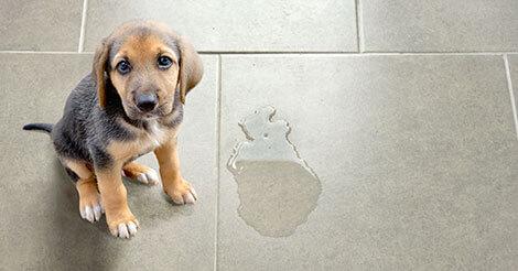 ممکن است سگ جای نامناسب دستشویی کند